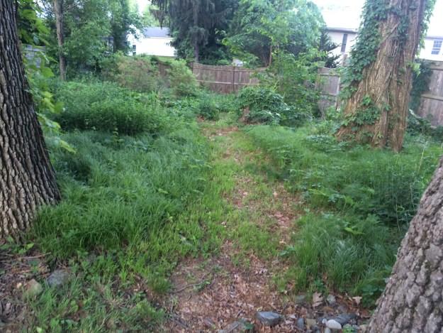 The path through the Pennsylvania sedge.