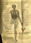 Figure 1: Unassembled flap anatomy, page 1, Vesalius De Fabrica, 1555