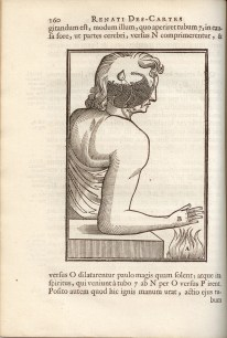Pineal gland in brain triggers pain reflex, woodcut, Tractatus de Homine, 1677, page 160.