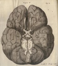 Fig. 1: Thomas Willis, 1667, NLM images