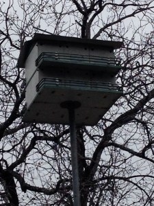 Purple Martin Birdhouse