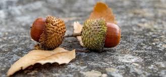 acorn - gravity
