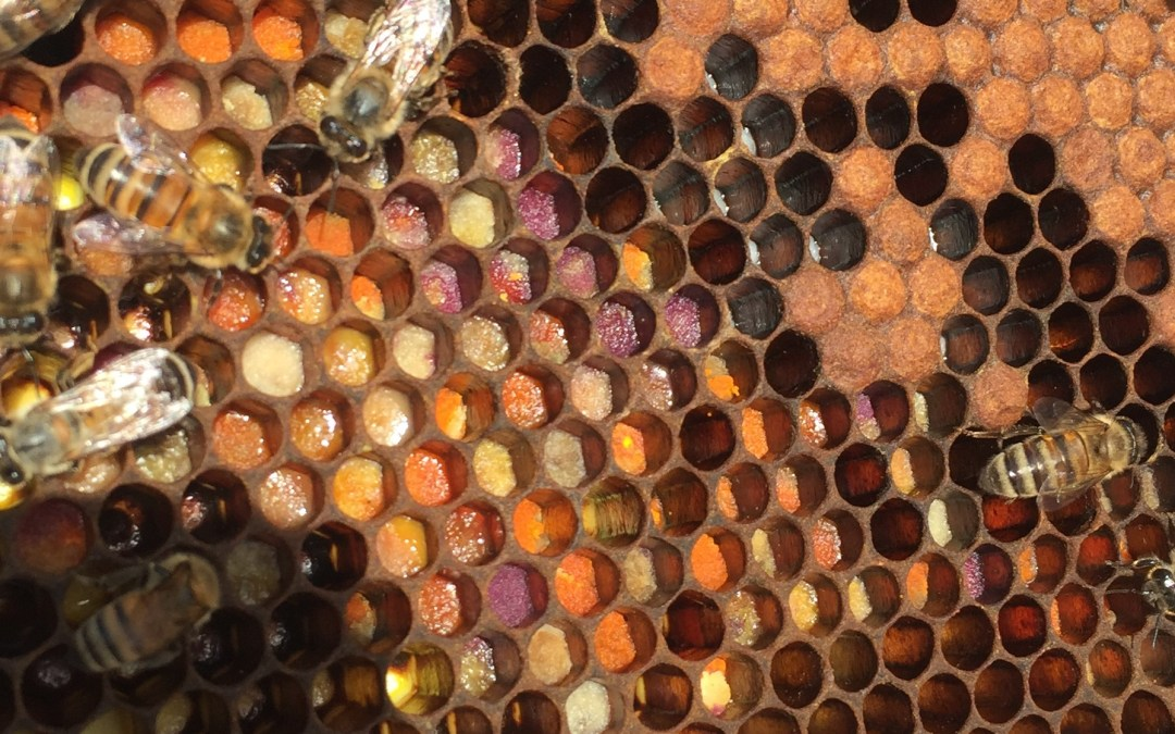 Becker Bee Buzz 8.27: Bee Kind to Our Pollinators