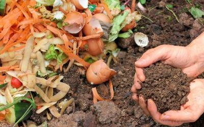 Introduction to Compost