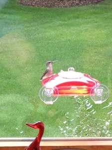 Hummingbird - the Sitter
