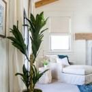 Best of Blog: Indoor Plants