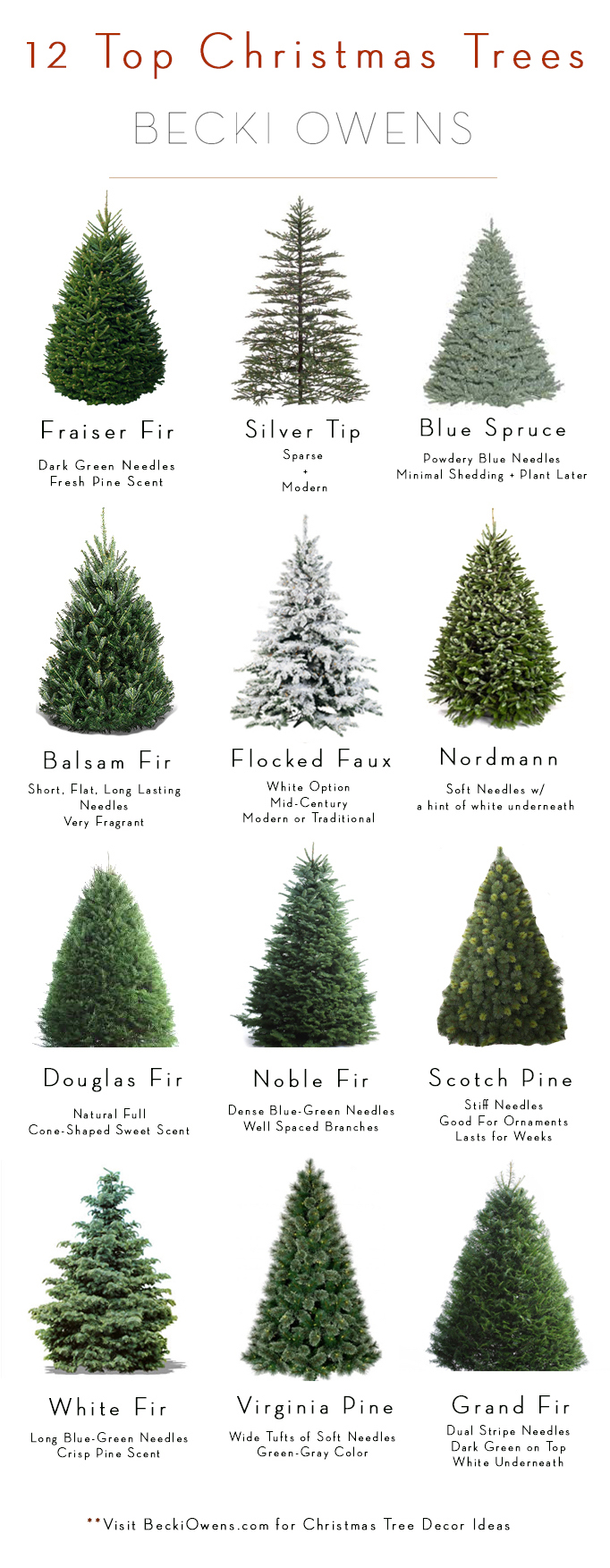 12 top christmas trees