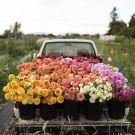 Mood: Fall Florals