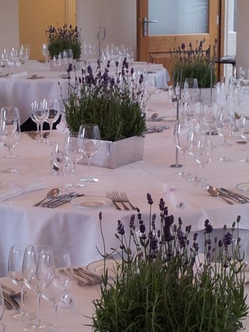 Simple lavender plants in mirrored cubes...