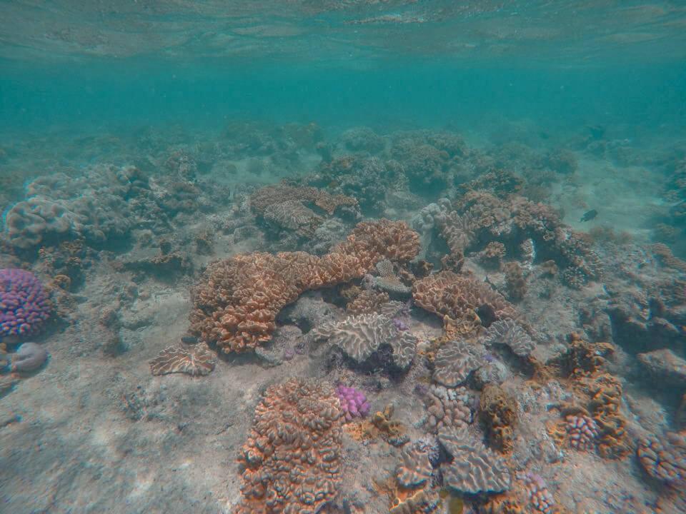 The Great Barrier Reef in Australia