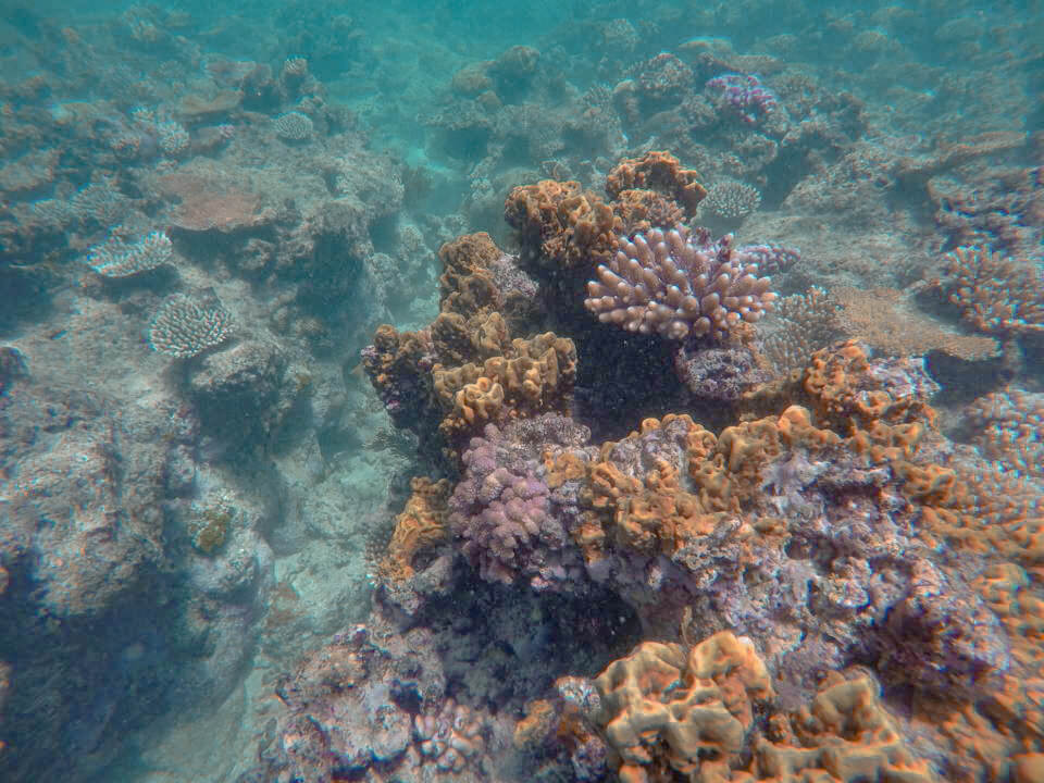 coralls in the Great barrier reef near Cairns