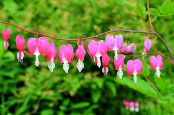 A String Of Bleeding Hearts: Top 20% award for the day of 1/22/16...
