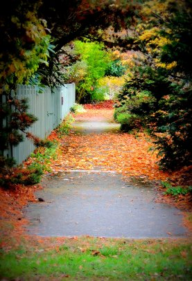 Autumn Walkway: Top 20% award for the day of 2/3/16...