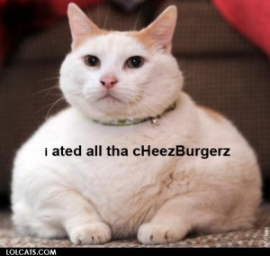 Just a fat cat with a cheesy caption