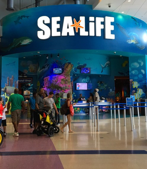 SEA LIFE Aquarium (13)