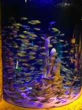 SEA LIFE Aquarium (9)