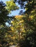 Upper trails