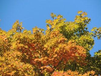 Leaf peeping fix