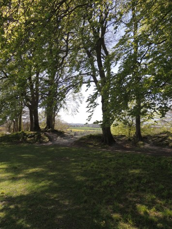 Beech Trees on the ramparts