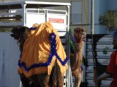 Who can forget the camels from Epiphany
