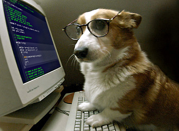 At least I have my corgi. (Photo credit: http://www.dignited.com/wp-content/uploads/2014/05/I-heard-hes-good-at-coding-l.jpg)