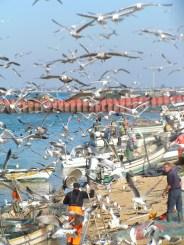 Gulls at Culatra