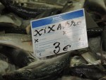 Horse Mackerel - with another name and slightly cheaper!