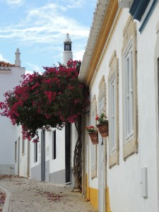 Bougainvillea in Tavira
