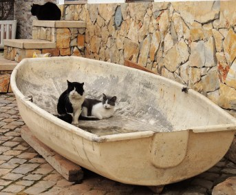 Feline friends in a boat!