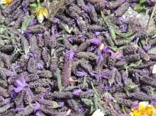 Lavender carpet