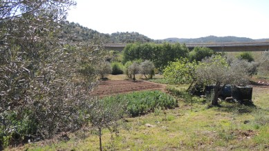 Allotments under the road bridge to Alcaria