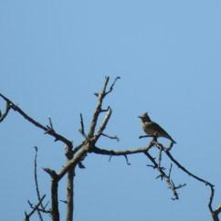 Had trouble focusing on the lark