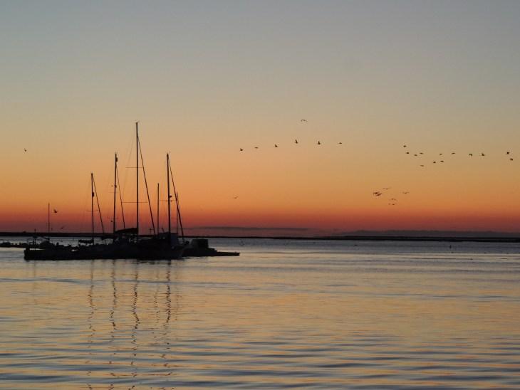 Cormorants heading east