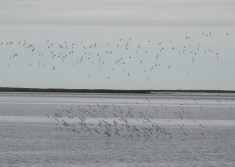 Flocks above and below