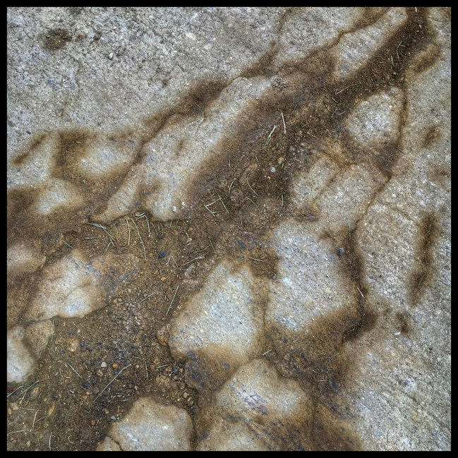 Dirt arises from the cracks in the concrete.