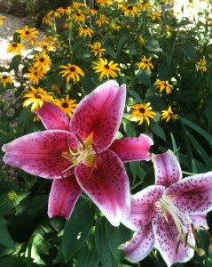 Stargazer Lily and Black Eye Susans