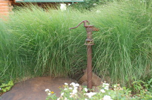 Maidenhair Grasses