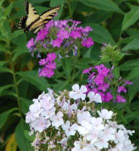 Loved by Butterflies