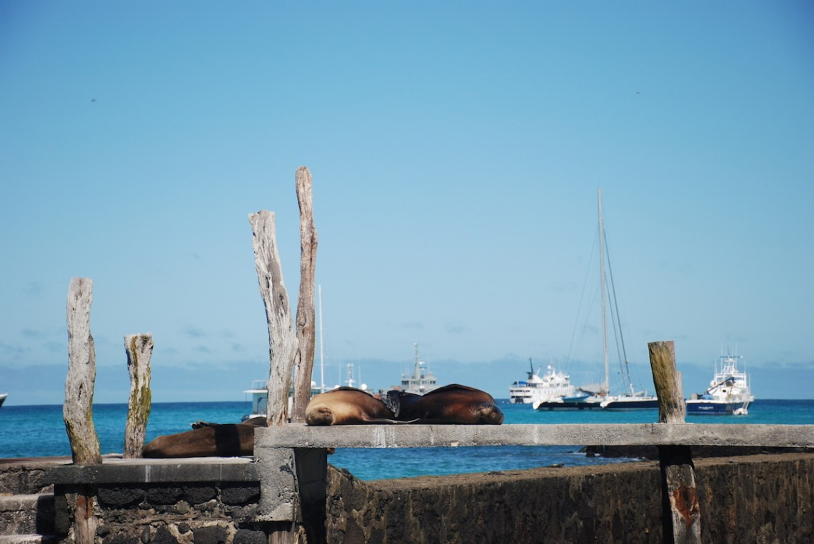 A Guide To Visiting The Galapagos On A Budget