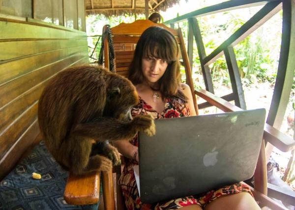 Monkeys in Brazil