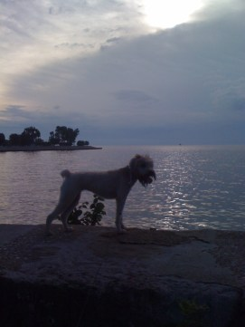 Dawn, atop the lakefront wall