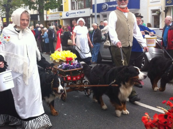 Dogs pulling small Victorian style carriages