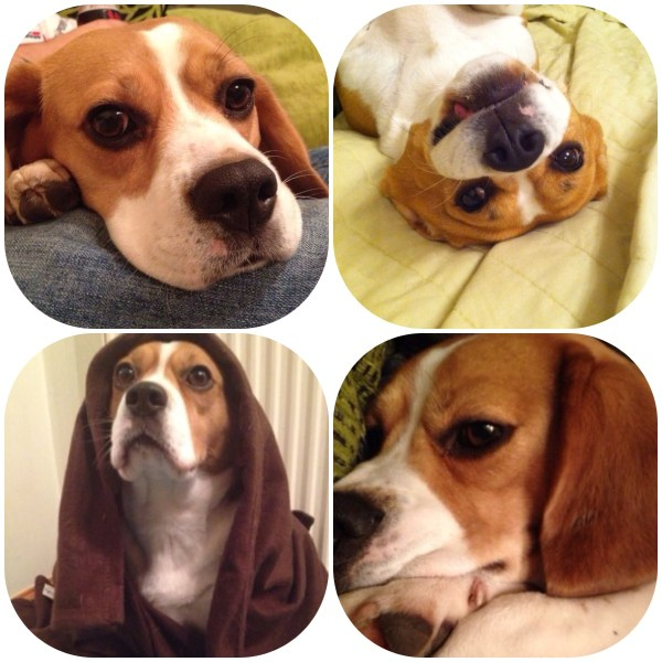 Various faces of Gemma