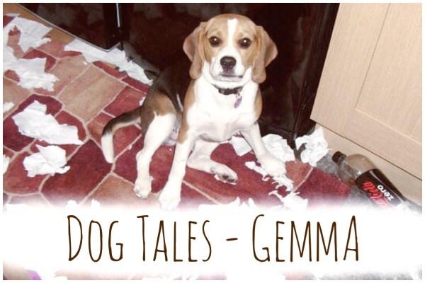 Gemma Beagle Dog Tales