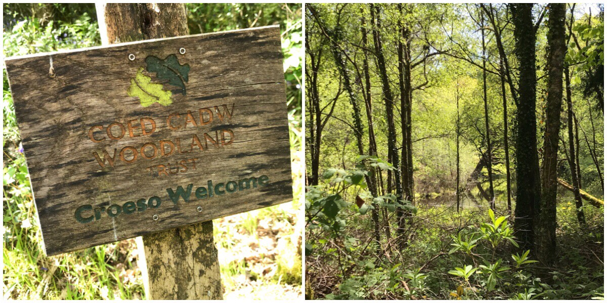 On the left the Woodland Trust sign and on the right a view through the woodlands that surround Llyn Mair