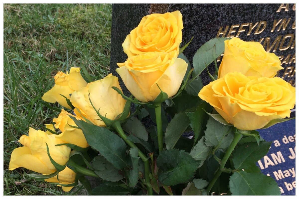 Yellow roses by Taid's graveside