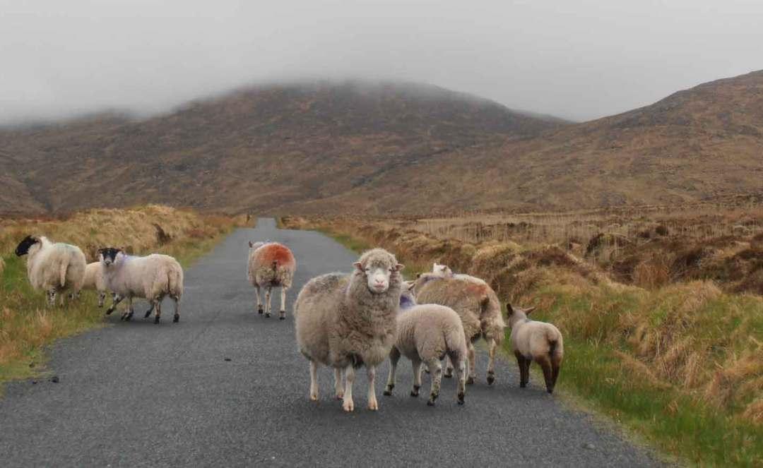 conduire en Irlande