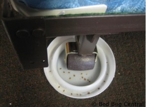 Bed bug interceptor used on a bed leg.