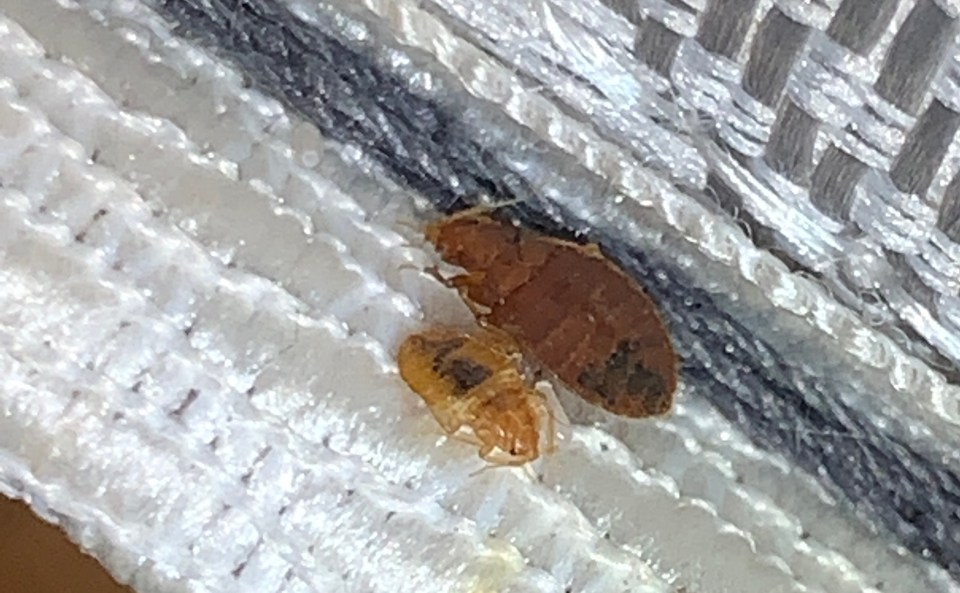 Bed bug heat treatment Owasso OK, Heat Bed Bug Treatment Owasso OK Area:, Dead Bug Walkin LLC