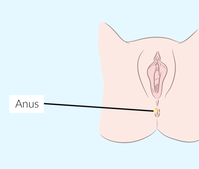 What Is An Anal Orgasm Anatomy Of An Anal Orgasm